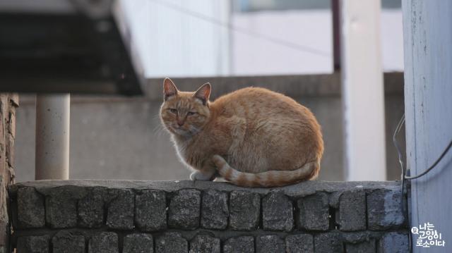 我是一隻貓預告片 01