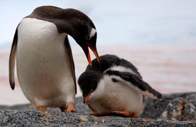 朗恩納菲恩:我與南極企鵝的快樂時光劇照 1