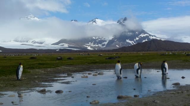 朗恩納菲恩:我與南極企鵝的快樂時光劇照 3
