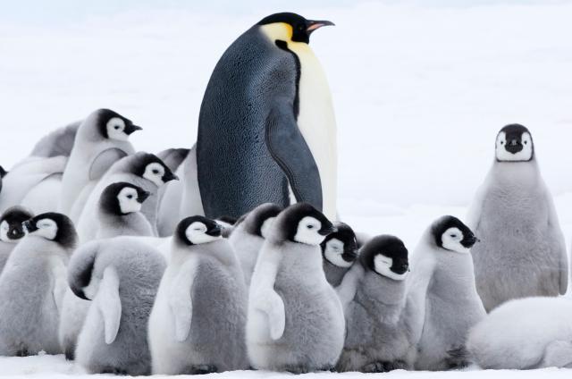 企鵝寶貝2:極地的呼喚預告片 01