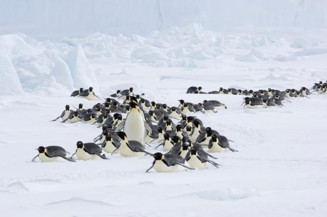 企鵝寶貝2:極地的呼喚劇照 2