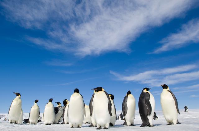 企鵝寶貝2:極地的呼喚劇照 3