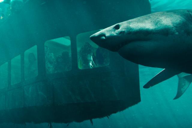 絕鯊47:猛鯊出籠預告片 01