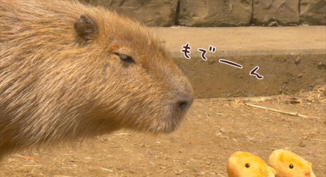 水豚君第7話【Let's go~ 水豚君散步】 線上看