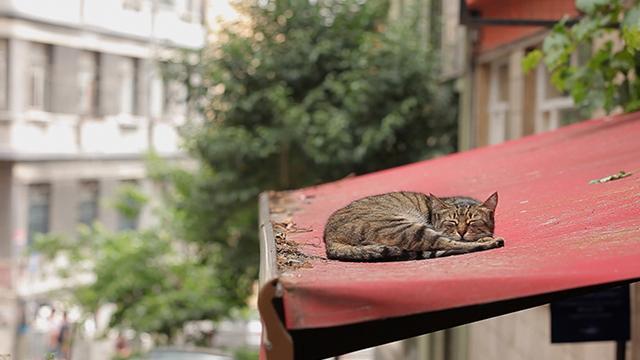 愛貓之城劇照 4