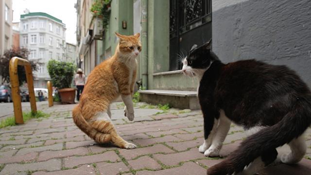 愛貓之城劇照 5
