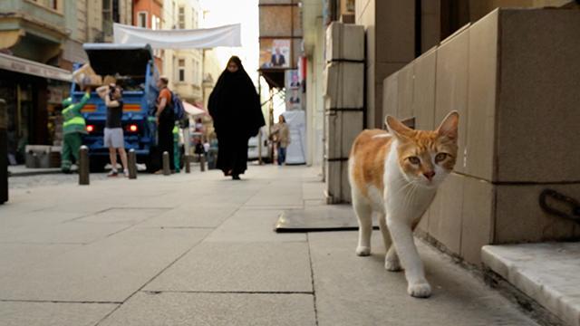 愛貓之城劇照 1