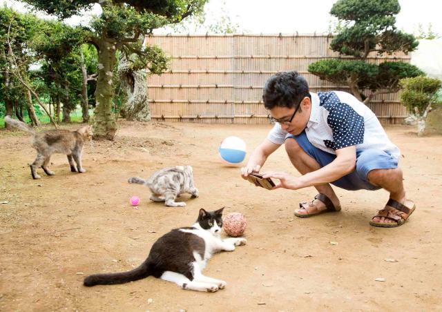 貓咪收集之家劇照 4