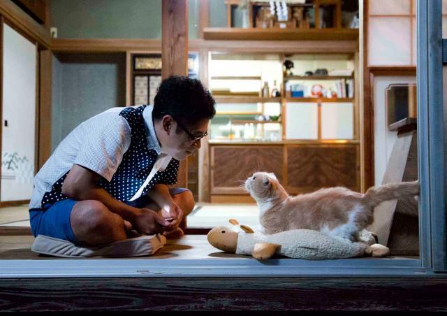 貓咪收集之家劇照 5