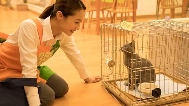 貓是用來抱的劇照 3