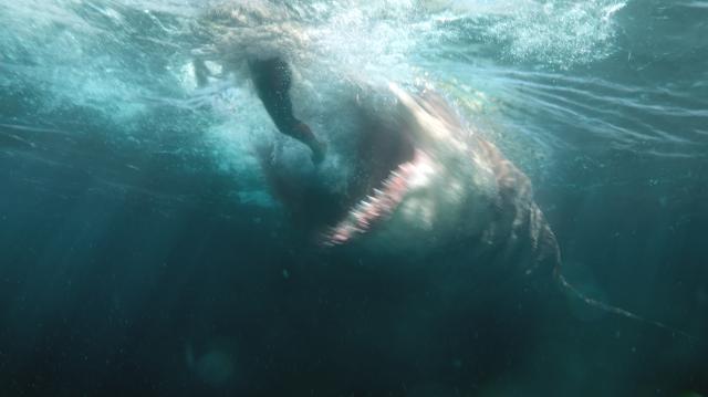 巨齒鯊劇照 2