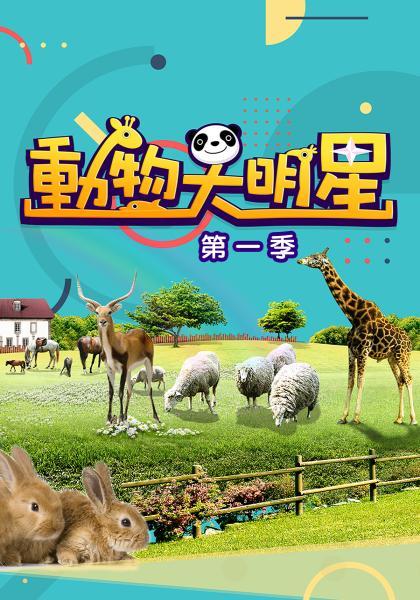動物大明星第一季 第6集線上看