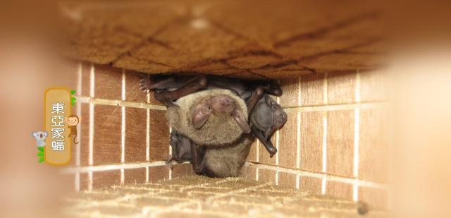 動物大明星 第五季#03 蝙蝠 線上看